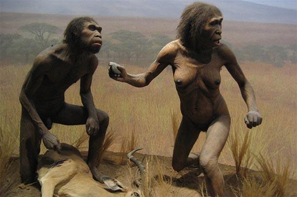 Asari - Homo Ergaster